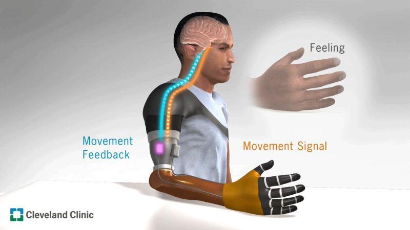 Sensory Feedback illustration